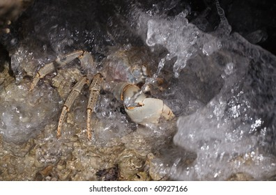 Crab under water on the rock