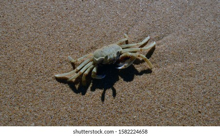Crab walking on the sand on a beach
