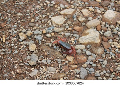 Crab walking on the sidewalk of the mountain.