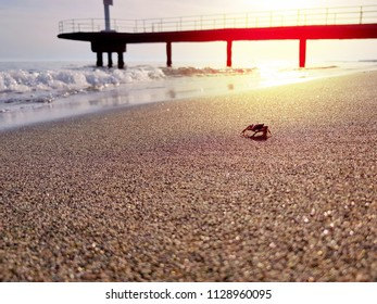 Crab walks on the beach near water at sunset