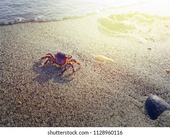 Crab walks on the beach near water