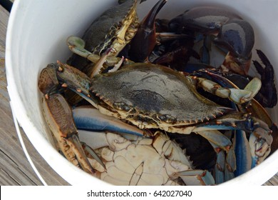 Crabs in a bucket