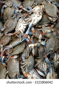 Crabs in a bucket at the market.