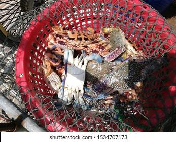 Crabs in a bucket at the market, Krabi, Thailand
