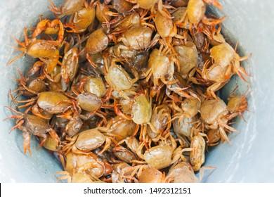 crabs in a bucket sea food