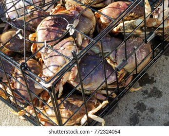 Crabs in a cage