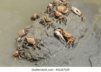 crabs in the marshes of the guadalquivir