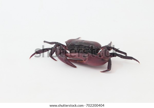 Crabs on a white background.