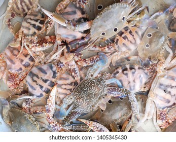 Blue+crabs Stock Photos, Images & Photography | Shutterstock