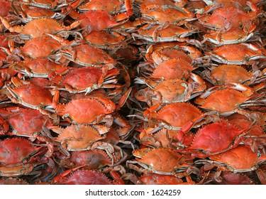 crabs sea food