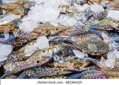Crabs are sold in the Thai seafood market.