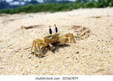 Crabs in the wild on the island of Sri Lanka