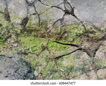 crack concrete wall with green lichen texture