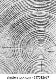 crack wood tree texture