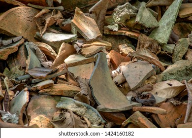 The cracked clay pots are placed under a large tree.