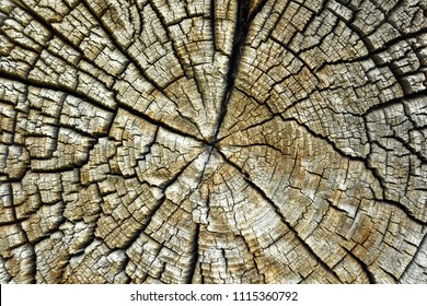 cracked pith of spruce log, texture of weathered wooden cross section