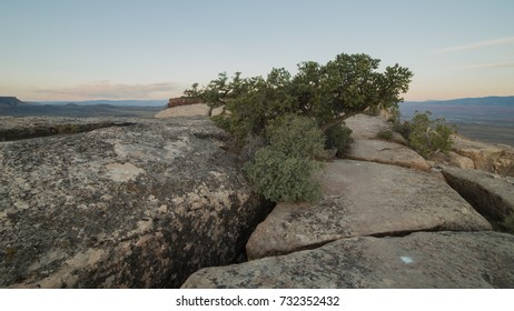 Cracked sandstone and windblown oak and juniper bushes near the western edge of Gooseberry Mesa in Southern Utah.