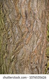 a cracked tree bark