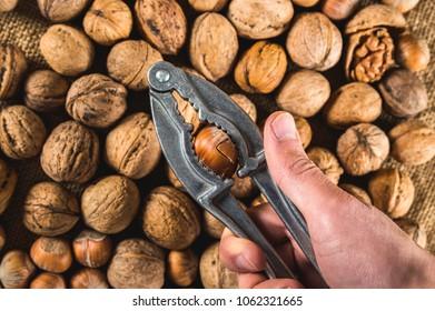 Cracking the hazelnut using nut cracker in man hand