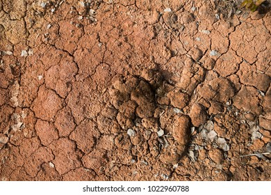 cracks on the clay surface. Drought.