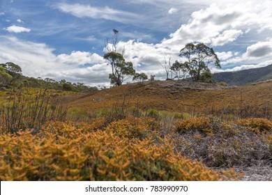 Cradle Mountain Landscape