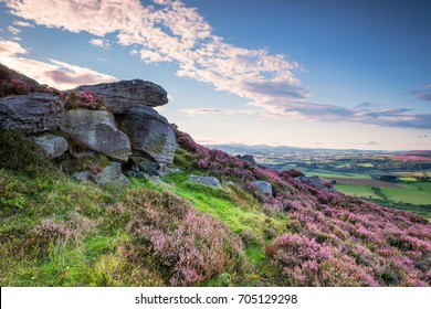 Crags and Heather on Simonside Hills / Popular with walkers and hikers the Simonside Hills are covered with heather in summer, located in Northumberland National Park overlooking the Cheviot Hills