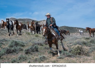 Craig, CO May 5,2018: Cowboy wrangler riding paint horse leading herd of galloping horses