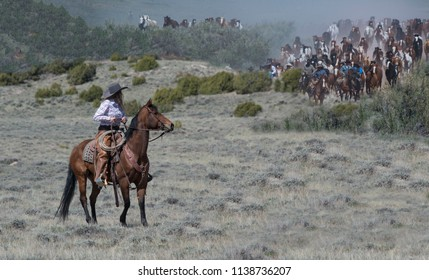 Craig, CO, USA - May 6, 2018: Cowgirl riding a bay horse is ready to help move hundreds of rapidly approaching horses on annual Sombrero Ranch Great American Horse Drive