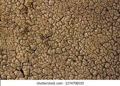 Crak desert floor