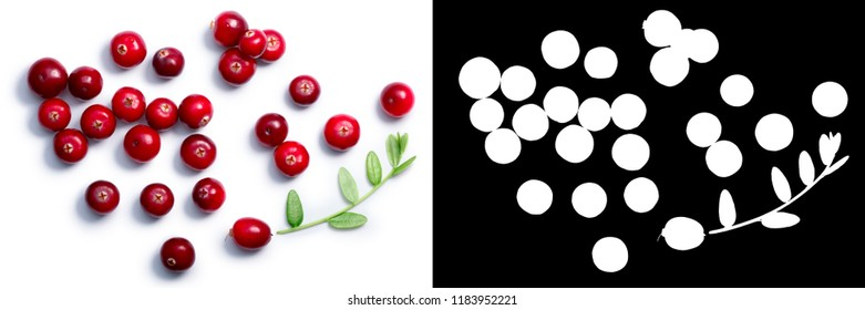 Cranberries (fruits of Vaccinium oxycoccus) with leaves, top view. Clipping paths, shadow separated