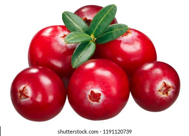 Cranberries (fruits of Vaccinium oxycoccus), pile of six