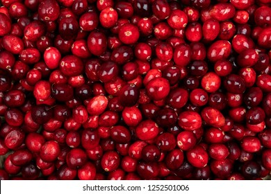Cranberry. Cranberry background. Cranberries in water. Food background.