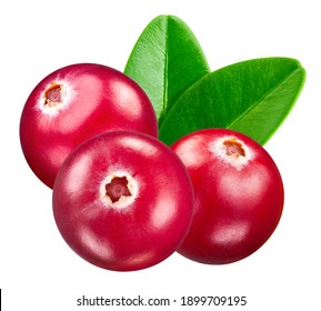 Cranberry fruit. Cranberry isolated on white background. Cranberry clipping path.