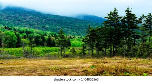 Cranberry Glades Botanical Area, Monongahela National Forest, Pocahontas County, West Virginia USA