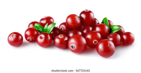 Cranberry. Heap of berries with leaves isolated on white backgrouund. Full depth of field.