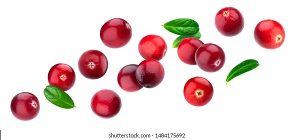Cranberry isolated on white background with clipping path, berry collection, fresh falling cranberries with leaves