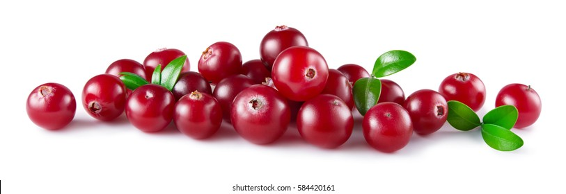 Cranberry with leaves isolated on white background. Fresh raw berries. Full depth of field.