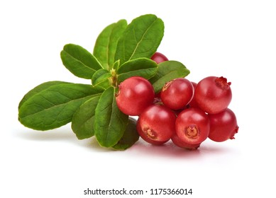 Cranberry. Ripe Fresh Cranberries with leaves, isolated on white background.
