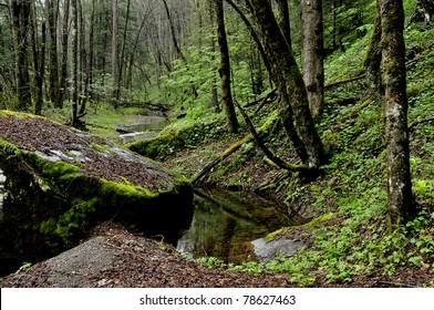 Cranberry Wilderness, Monongahela National Forest, West Virginia, USA