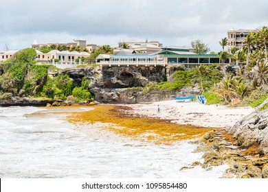 Crane Beach, Christ Church Parish / Barbados - April 2018: Huge piles of sargassum grass & seaweed has washed up on many beaches and disrupted the tourism along the south and east coasts of Barbados.