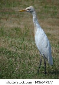 The crane bird is a large, long legged, and long necked bird. It flies with neck outstretched. The crane is a symbol of happiness, fortune, and eternal youth. It has a long and sharp beak.