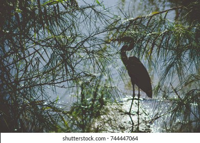 A crane bird on the water hidden by leaves nature background
