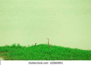 crane with green background