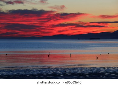 Crane at Richmond Vancouver British Columbia Canada Seaside