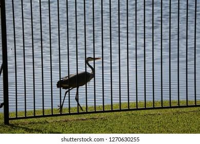 A Crane in Suburbia
