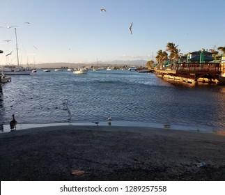 cranes, pelicans, fish, and boats in La Guancha in Ponce, Puerto Rico
