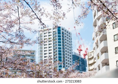 Cranes of the top of the building with sakura framed on foreground