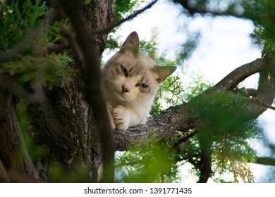 Cranky white cat between the branches on a tree