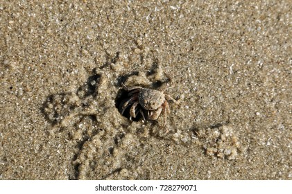 Crap in Sand beach with sand texture and background