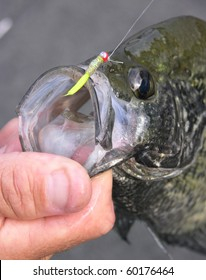 Crappie caught on a micro-jig by a fly fisherman